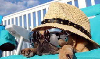 Coup de chaleur chez le chien : DANGER !