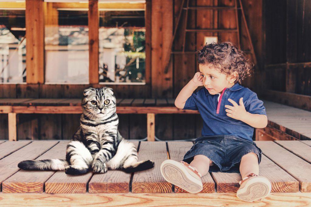 Le chat, la grossesse et le bébé | Animaux Santé