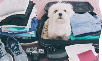 Bien voyager avec son animal !