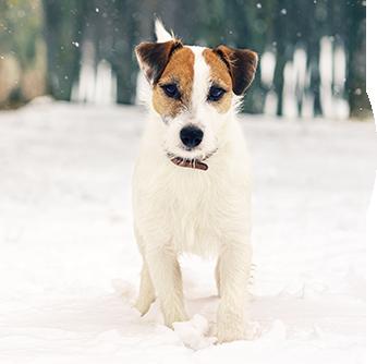 assurance chien mutuelle chien prix mutuelle chien animaux sant. Black Bedroom Furniture Sets. Home Design Ideas