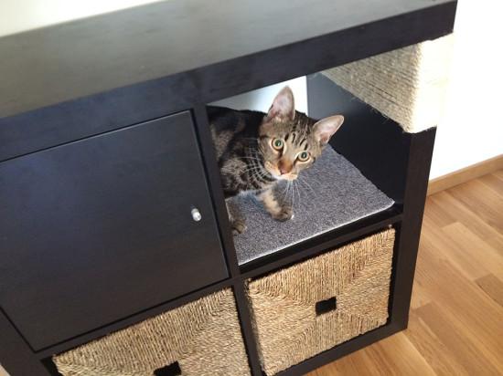 Les objets indispensables pour chiens et chats design et conomiques animaux sant - Meuble litiere chat ikea ...