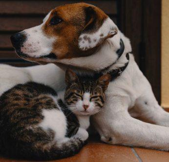 espérance de vie animaux de compagnie