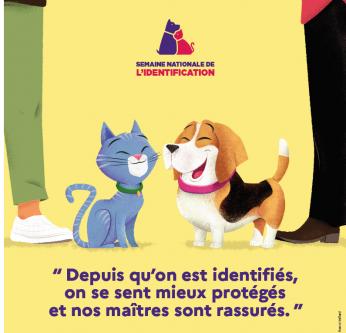 Identification ICAD