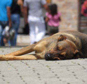 journée contre l'abandon des animaux domestiques