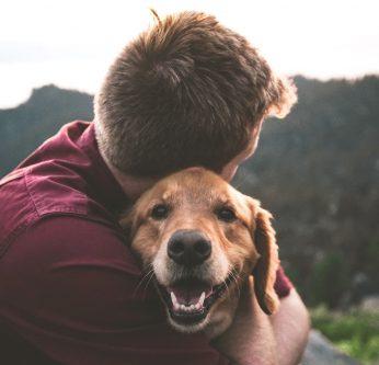 permis d'adoption