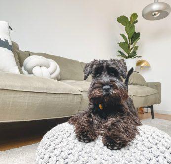 chien appartement